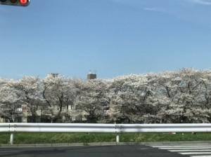 春の大試乗会開催!!
