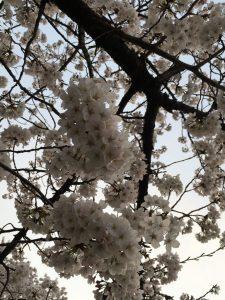 ・ω・)春の大試乗会!