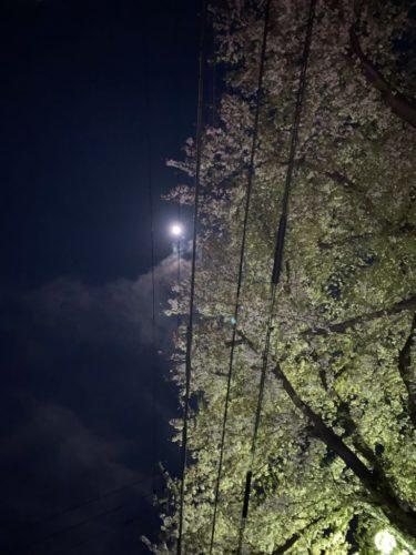 夜桜ヾ ^_^♪